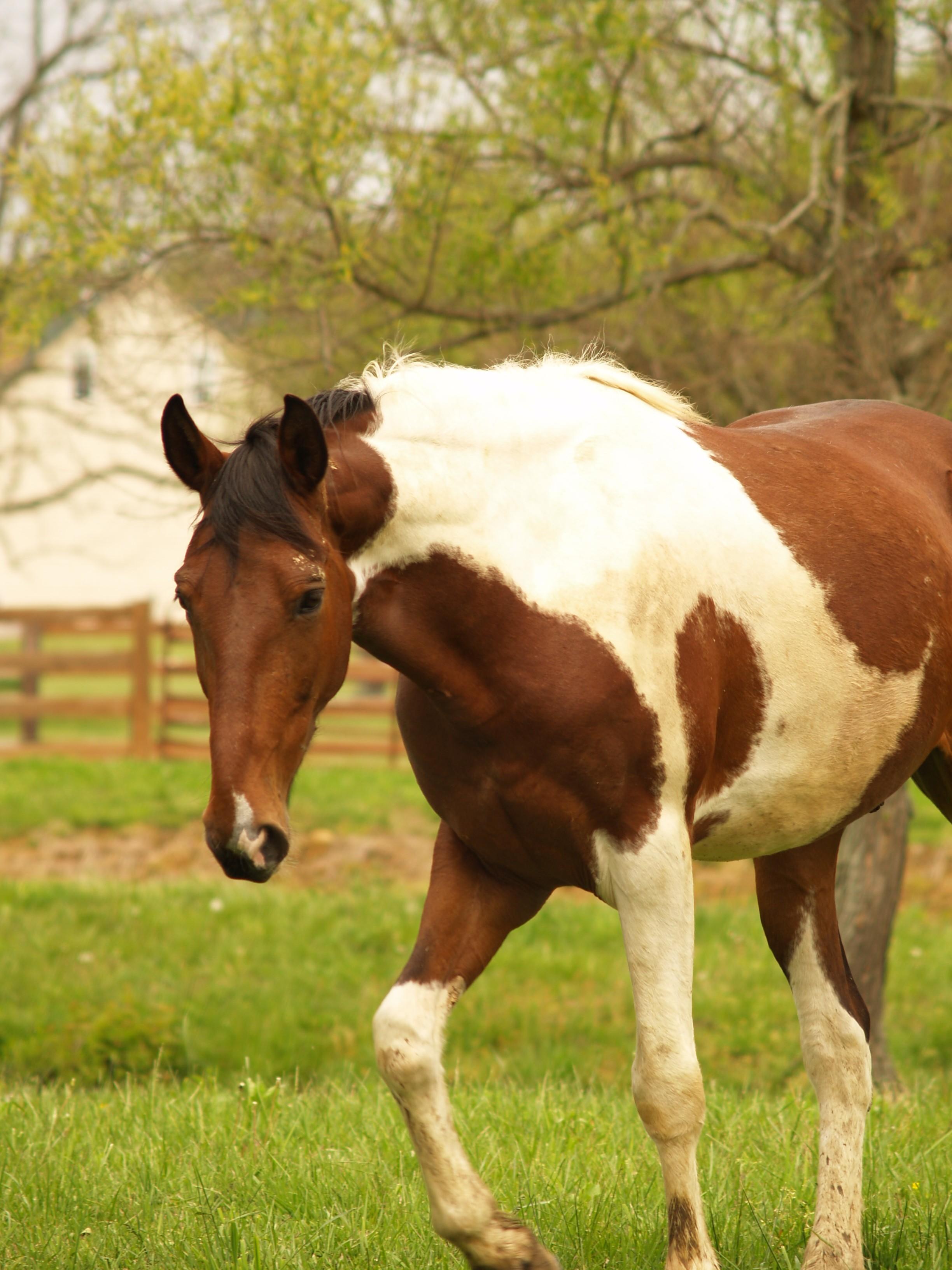 Rabies In Horse - HD2448×3264