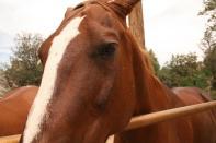 Horsehttp://bit.ly/acawmediavolunteer
